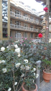 Afgh. Roses