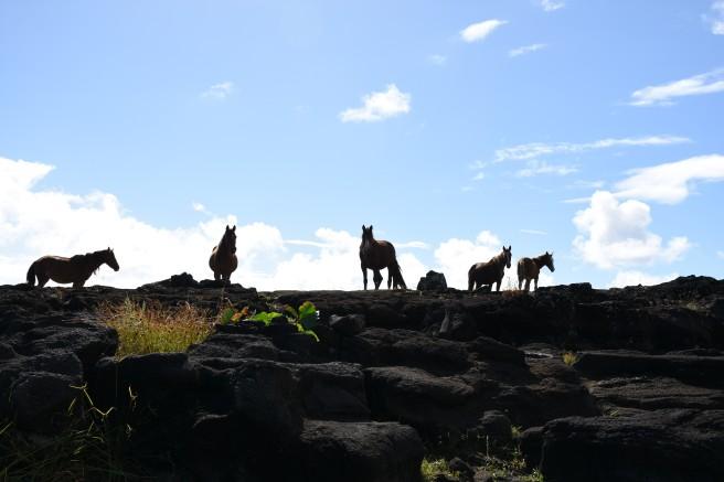 HM feral horses