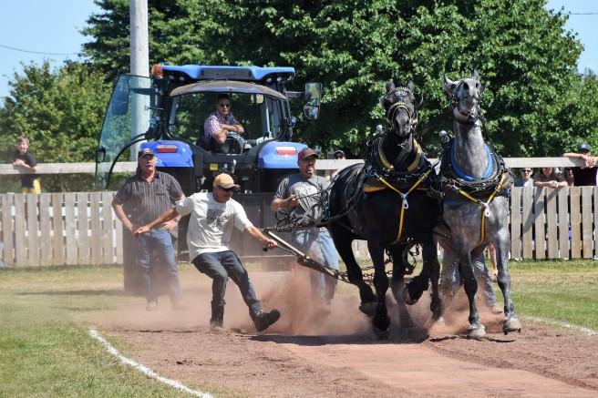 Heavy horse pull Dundas 2019